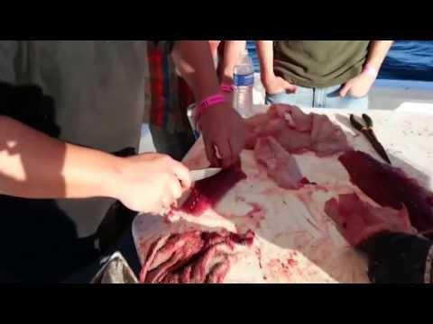 Rocky Point Fishing Club, pesca deportiva Puerto Peñasco from YouTube · Duration:  2 minutes 14 seconds  · 348 views · uploaded on 27.06.2016 · uploaded by Ricardo Chávez Cárdenas