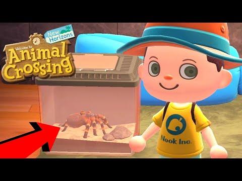 EEN VOGELSPIN ALS HUISDIER ?!   Animal Crossing: New Horizons #3