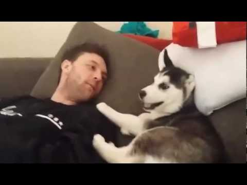 Husky puppy argues w/ Aaron Dissell & Puts foot in mouth