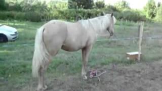 kuda putih farell