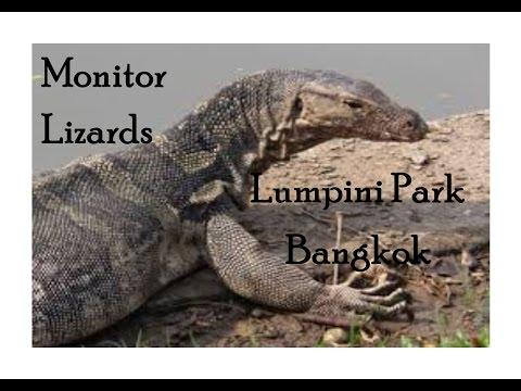 Bangkok Thailand, Lumpini Park