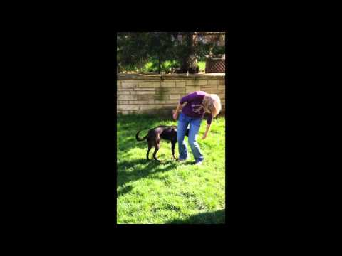 """Teaching """"Around"""" Exercise - Spring Training for Dogs"""