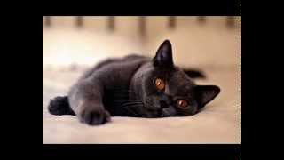 Корм для кошек ямс купить