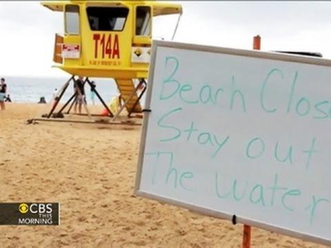 Shark attack: Man in Hawaii dies after foot bitten