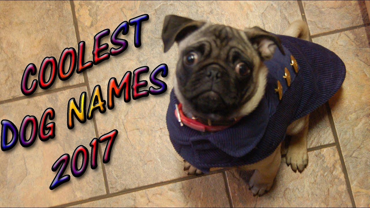 Coolest Dog Names 2017 Best Pet Puppies