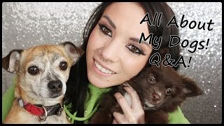 Meet My New Puppy + Q&A About My Dogs!