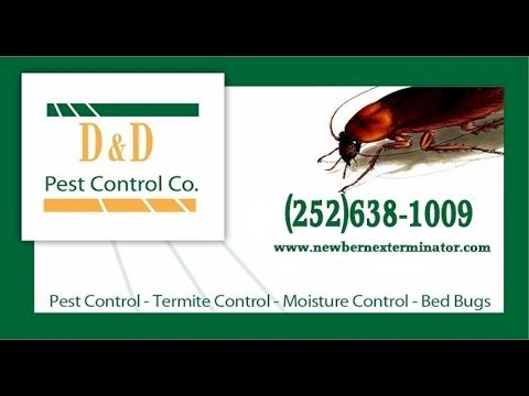 Termite Treatment / Termidor Treatment - New Bern, NC