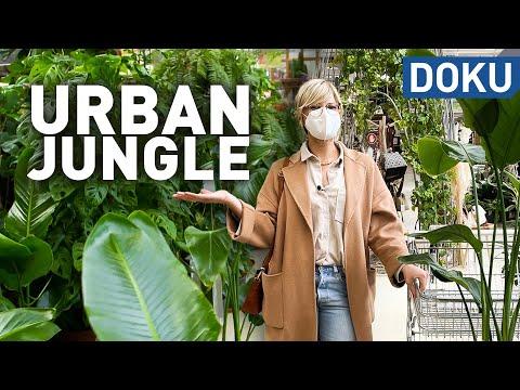Urban Jungle - Der Hype um Zimmerpflanzen | dokus und reportagen
