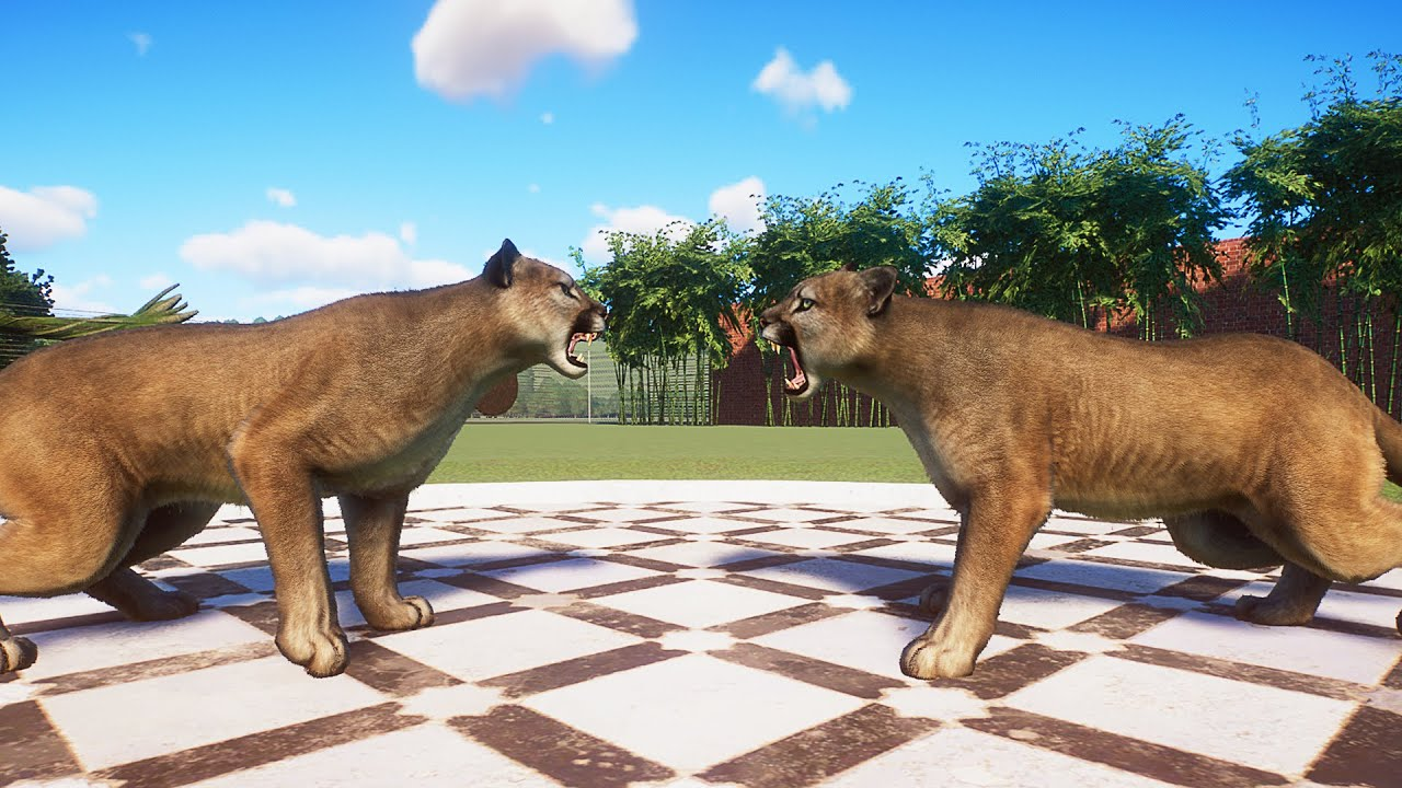 Cougar Fight in Planet Zoo | Planet Zoo Battle
