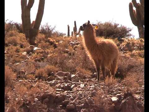 Traveling the Altiplano Bolivia