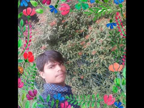 Md Ashfaque Rahi