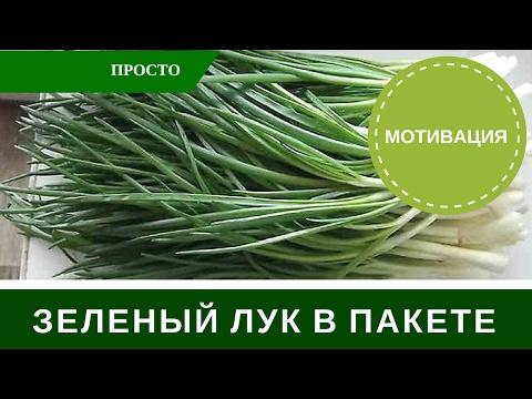 Лук На Перо в Пакете Зеленый Лук в Домашних Условиях скачать