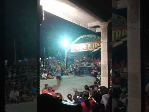 Samboyo putro polisi pegonan live patuk kampung baru
