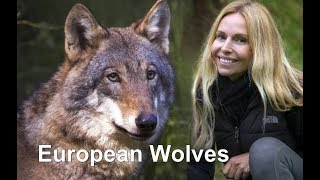 European Wolves...up Close
