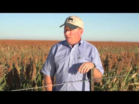 Sorghum: The Smart Choice