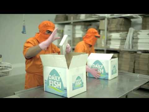 Daily Fish