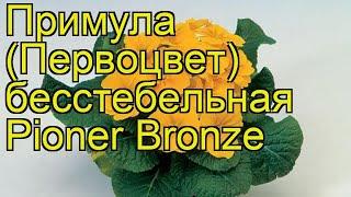 Примула бесстебельная Пионер Бронзе. Краткий обзор, описание primula acaulis Pioner Bronze