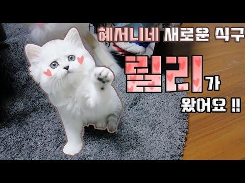 [혜서니네 새 식구 릴리♥] 고양이 분양 받았어요 !! ♥혜서니♥