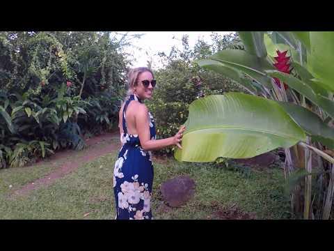 Gaiatree Sanctuary Organic Farm,  Taveuni, Fiji