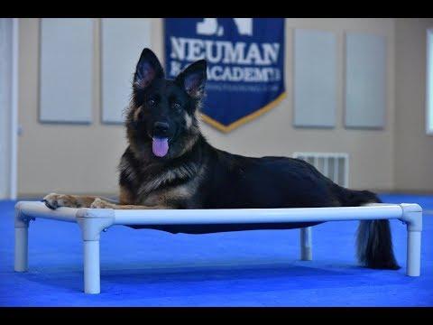 Cookie (German Shepherd) Boot Camp Dog Training Video Demonstration