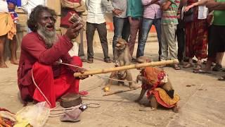 monkey show - Varanasi
