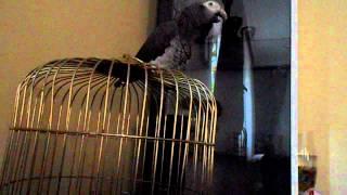 Konuşan Papagan şakir Sonuna kadar Dinleyin