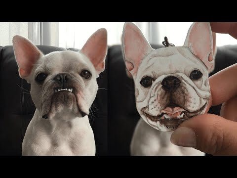 French Bulldog Isn't Really Happy