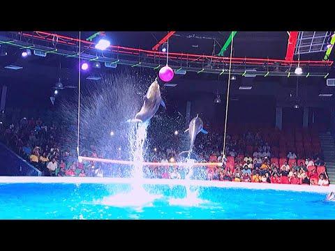 Dubai Dolphin Show Full HD | Dubai Dolphinarium | Dubai Dolphinarium Show  | Seaworld