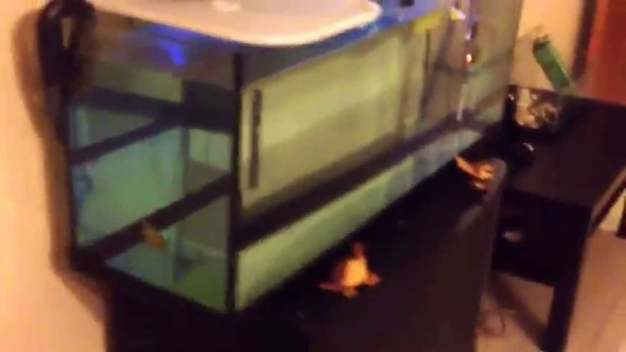 Tartarughe acquatiche acquario fai da te e zona emersa for Acquario per tartarughe acquatiche