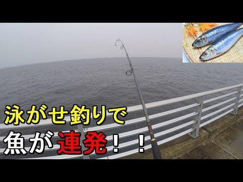 検見川浜突堤釣ったイワシの泳がせ釣りで爆釣…したのはいいんだけれども20190711