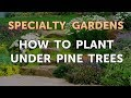 How to Plant Under Pine Trees