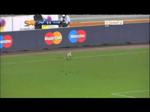 الهلال - قط يتجول في الملعب Vs الإتحاد.Cat in the Stadium
