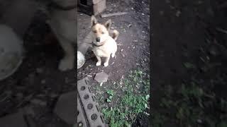 Рефлексы собаки
