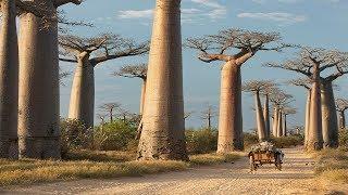 Неизведанный мир дикой Африки.  Документальный фильм