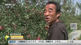 [国际财经报道]原产地访价格 陕西白水县:早熟苹果丰产 价格回落  CCTV财经