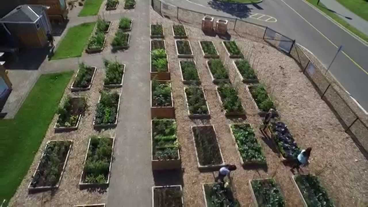 mohawk college community garden a birds eye view - Garden Design Birds Eye View