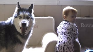 Mishka tries to steal a bagel from the baby!