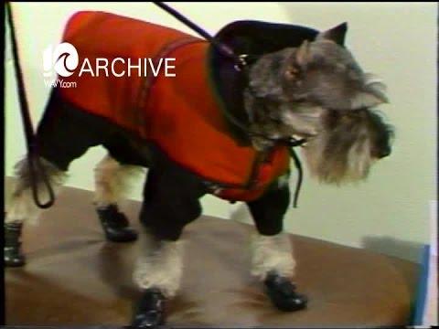 WAVY Archive: 1980 Doggie Fashion