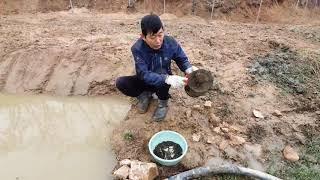 논,밭에  물고인 웅덩이에 토종 미꾸라지 키우는 방법