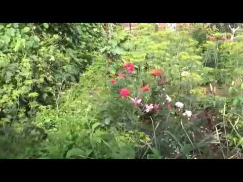 в гостях в саду землячки