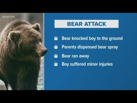 Redmond boy injured in bear attack at Yellowstone