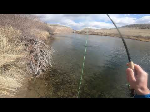 Colorado Gunnison River Fly Fishing Gold Medal Water (3/28/20)