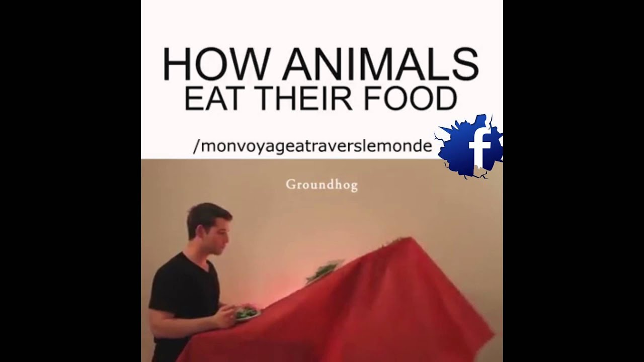 HOW ANIMALS EAT THEIR FOOD ! - YouTube