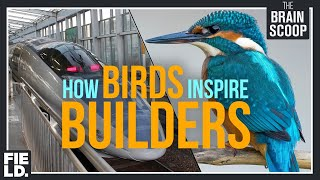 How Birds inspire Builders