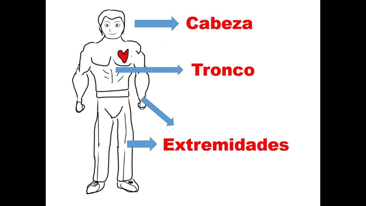 Bonito Tronco En El Cuerpo Humano Bandera - Anatomía de Las ...