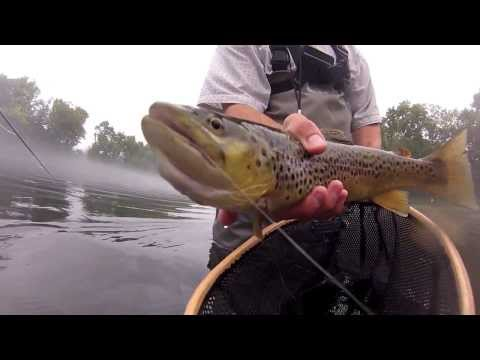 Caney Fork Brown | Fly Fishing Tennessee