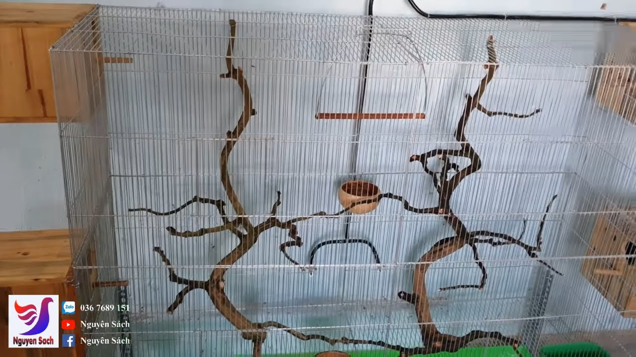 ✅ Setup Avi Mini Nuôi Chim Yến Phụng Làm Cảnh || Nguyên Sách – Tập 65