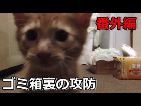 【番外編】ゴミ箱の裏で暴れる双子の子猫