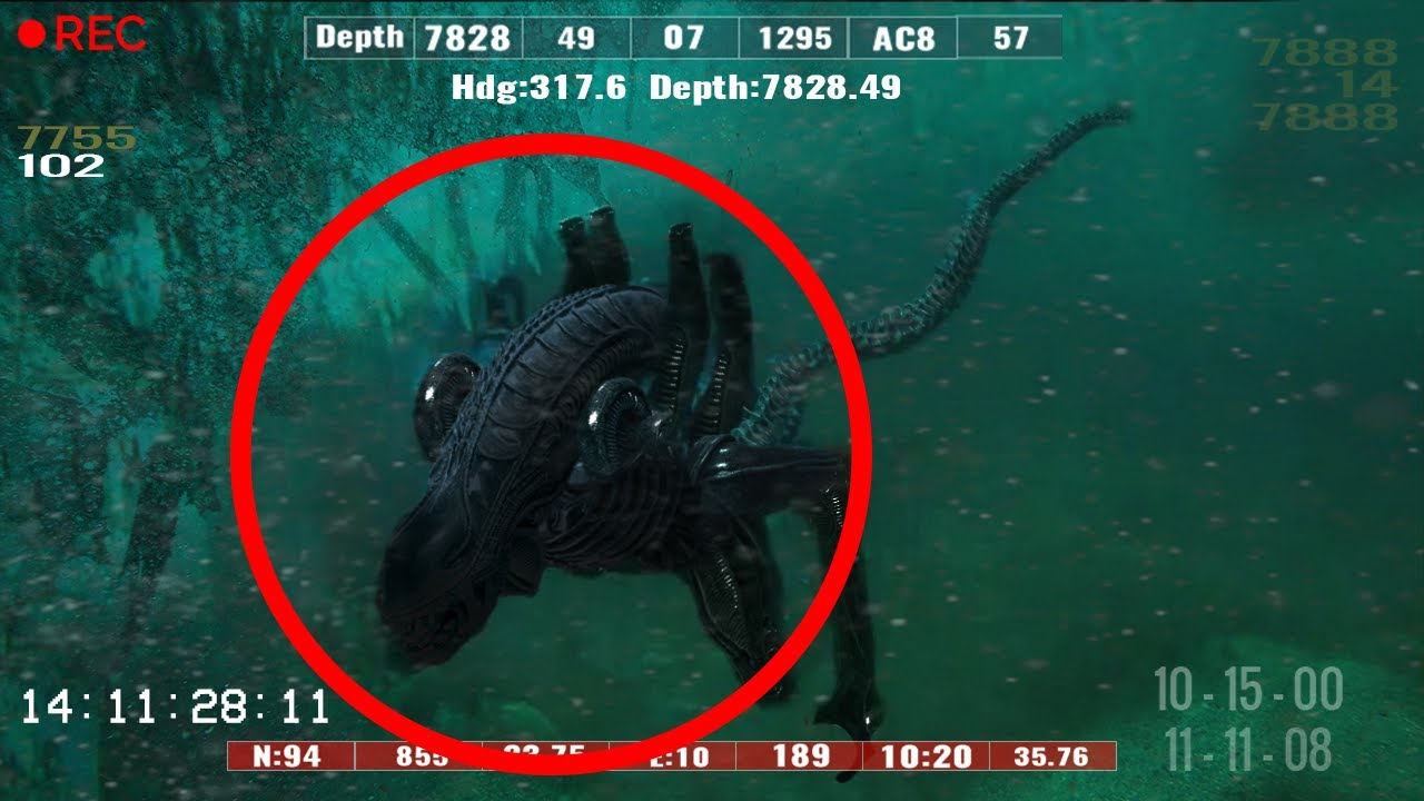 10 Most Bizarre Creatures Found In The Mariana Trench!