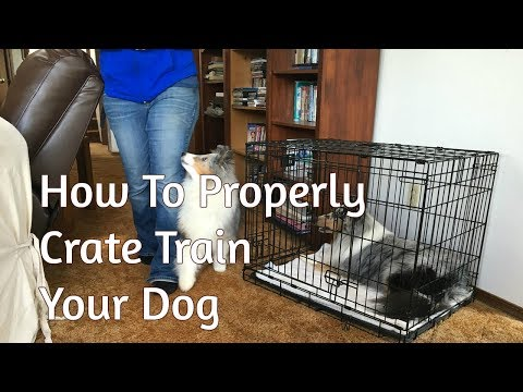 How To Properly Crate Train Your Dog
